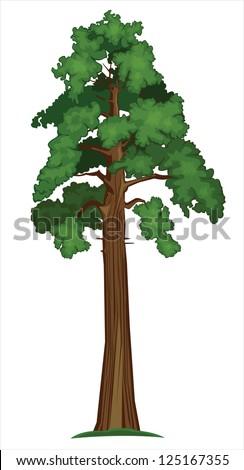 Vector illustration of Big Sequoia Tree - stock vector