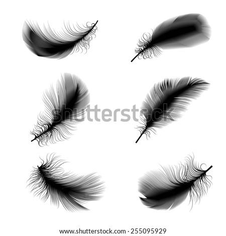 Vector illustration of bird feathers - stock vector