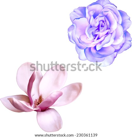Vector illustration of blue purple rose and magnolia flower isolated on white background - stock vector
