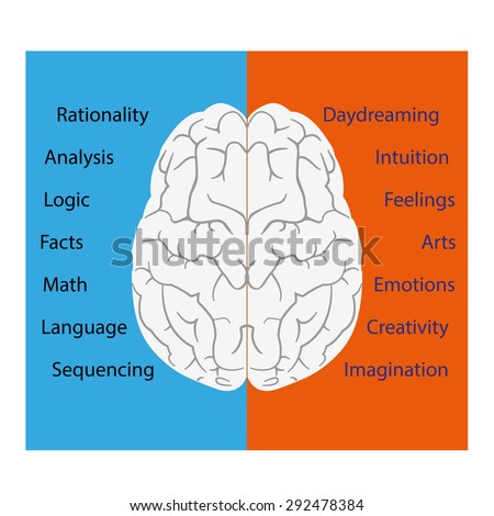 Vector illustration brain left right sides stock vector hd royalty vector illustration of brain left and right sides ccuart Choice Image
