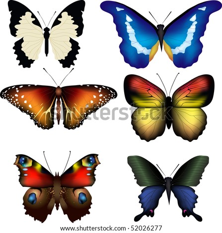 Vector illustration of butterflies on white