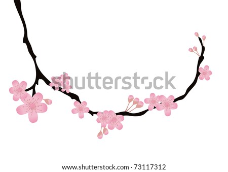 Vector illustration of cherry-tree branch with flowers in bloom - stock vector
