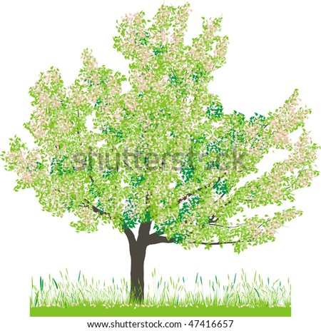 Vector illustration of cherry tree in spring - stock vector