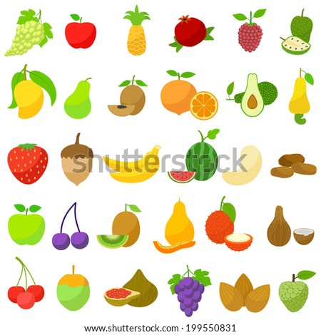 vector illustration of collection of various fresh fruit - stock vector