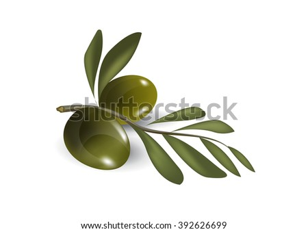 Vector illustration of detailed green olives with leaves on white background