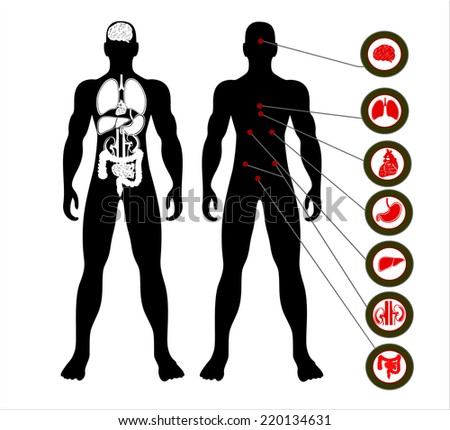 Vector illustration of diagram of human anatomy - stock vector