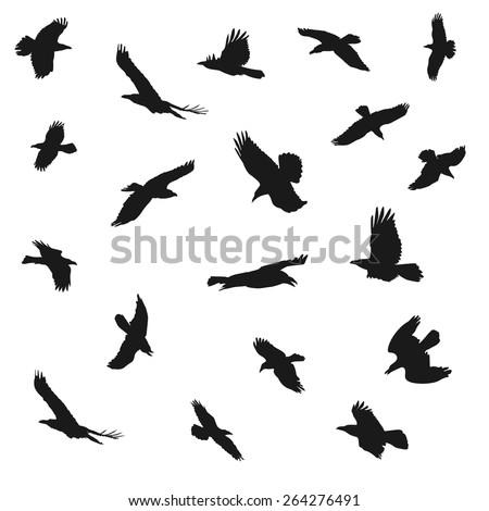 Vector illustration of eagles flying silhouettes. Concepts of elegance, strength and freedom. - stock vector
