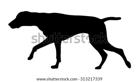 Vector illustration of german short hair pointer silhouette - stock vector
