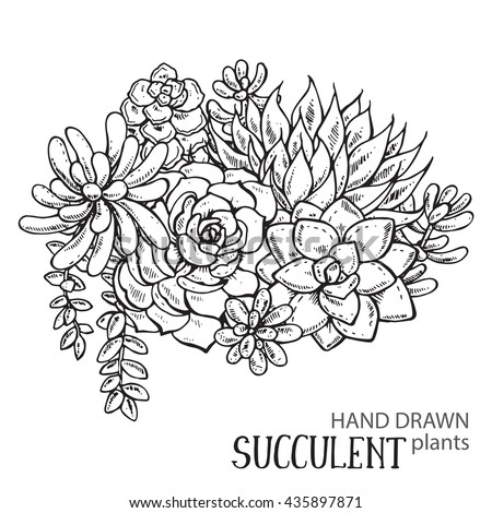 Vector illustration of hand drawn succulent plants. Black and white graphic for print, coloring book. Isolated on white background. - stock vector