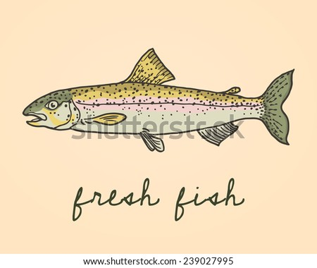 Vector illustration of hand drawn trout fish. Advertising, menu or packaging cool design elements. - stock vector