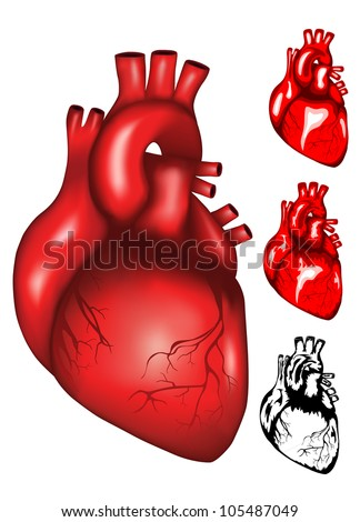 Vector illustration of human heart mesh, colour and black & white - stock vector