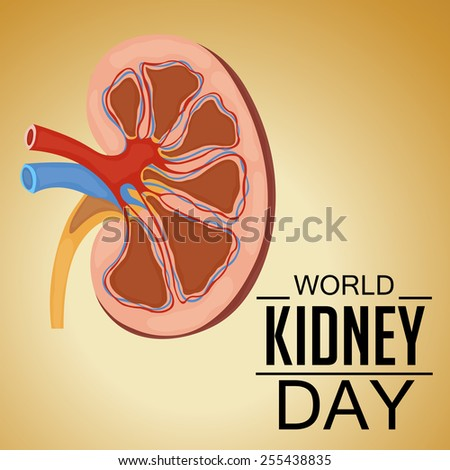 Vector illustration of Human Kidney for World Kidney Day.  - stock vector
