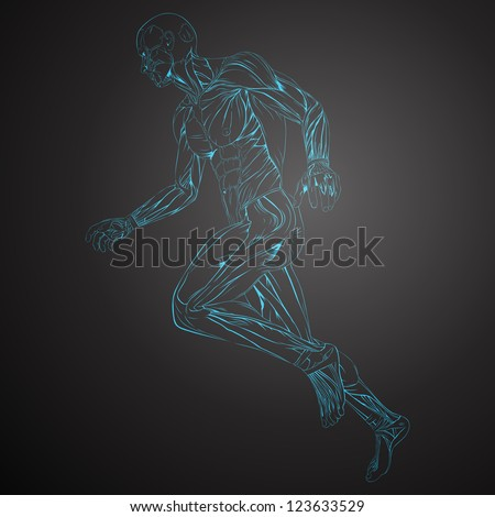 Vector Illustration of Human Muscle Anatomy - stock vector