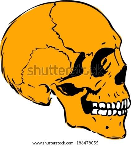 Vector illustration of human skull profile - stock vector
