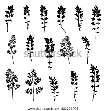 Vector illustration of isolated parsley leaves. 16 different black parsley leaves on white background.