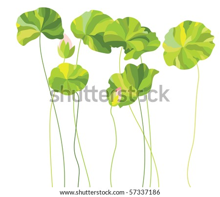 Vector illustration of lotus leaves and buds. - stock vector
