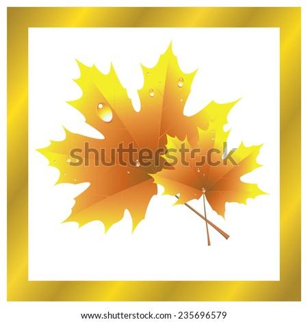 Vector illustration of maple leaf, golden autumn - stock vector