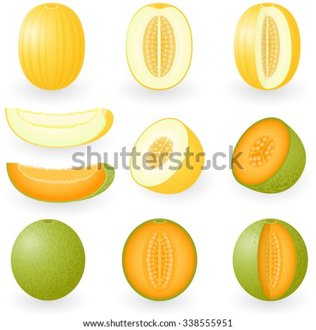 Vector illustration of melons - stock vector