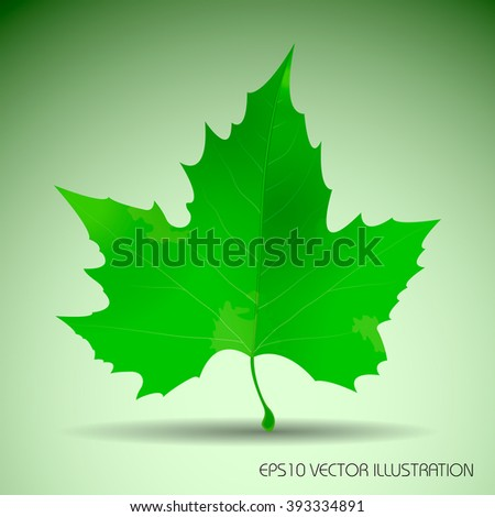 Vector illustration of natural maple leaf. Canadian symbol. ith shadow below.