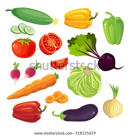 Vector illustration of of vegetables isolated on white background