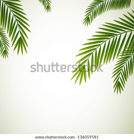 Vector Illustration of Palm Leaves on White Background - stock vector