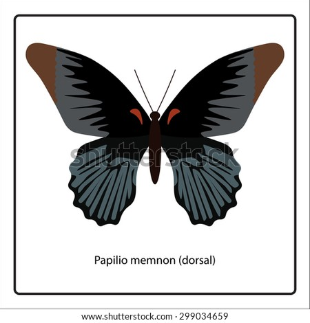 Vector illustration of Papilio memnon (dorsal) butterfly isolated on white background