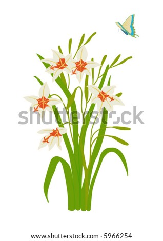 vector illustration of  peacock orchid with butterfly
