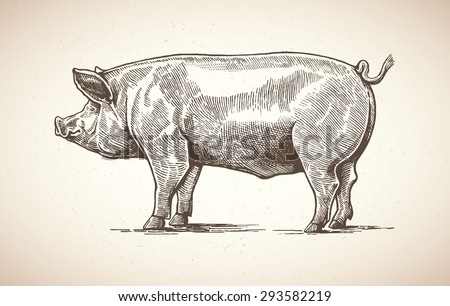 Vector illustration of pig in graphic style. Drawing by hand. - stock vector