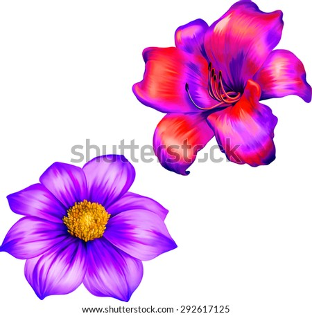 Vector illustration of pink Dahlia flower, purple lily Spring flower. Isolated on white background.