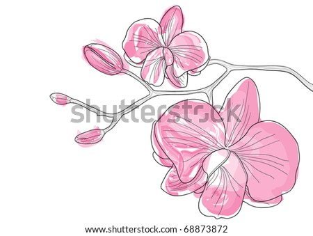 Vector illustration of pink orchid flowers - stock vector