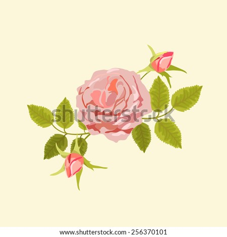 Vector illustration of pink tea-rose with buds and green foliage on beige background - stock vector