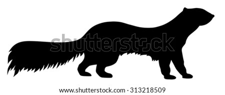 Vector illustration of polecat silhouette - stock vector
