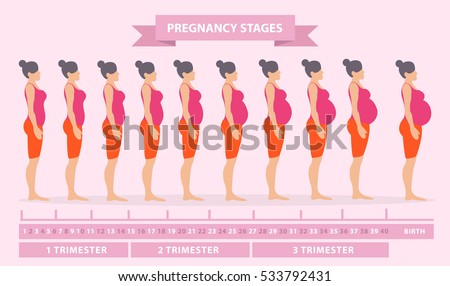 Vector illustration of pregnant female silhouettes. Changes in a woman's body in pregnancy. Pregnancy stages, trimesters and birth, pregnant woman and baby. Infographic elements