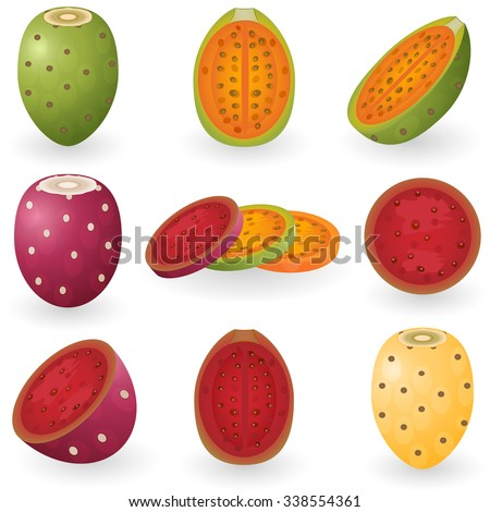 Vector illustration of prickly pear fruit also known as opuntia, cactus fig or tuna. - stock vector