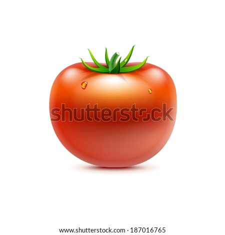 Vector illustration of red fresh tomato. Isolated on white background - stock vector