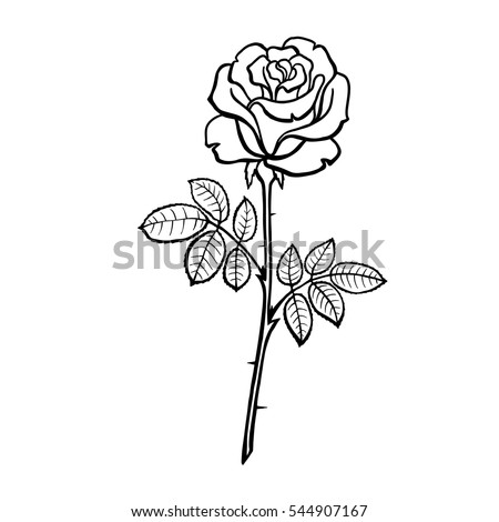 Vector Illustration Roses Line Drawing Coloring Stock Vector ...