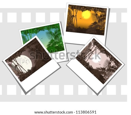 vector illustration of some photos depicting jungle forest - stock vector
