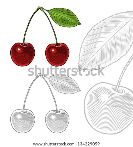 Vector illustration of sour cherry with leaf in vintage engraving style Isolated, grouped, transparent background. All elements are separated. - stock vector