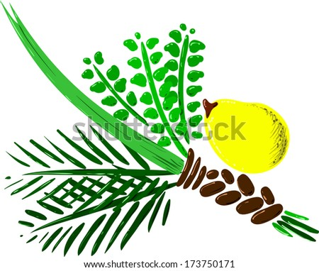 Vector illustration of the four species for Sukkot Jewish holiday.  - stock vector