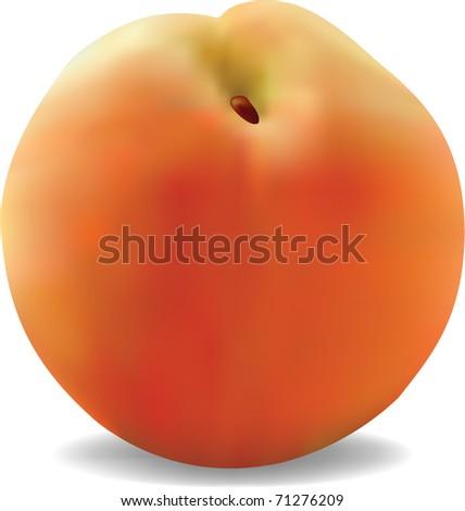 Vector illustration of the peach - stock vector