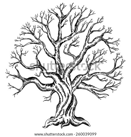 vector illustration of the tree silhouette. Variant of design of your family tree or wedding tree - stock vector