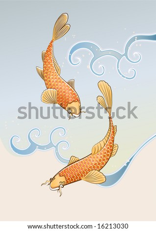 Vector illustration of two koi carps splashing in water and swiming around in a cool pond.
