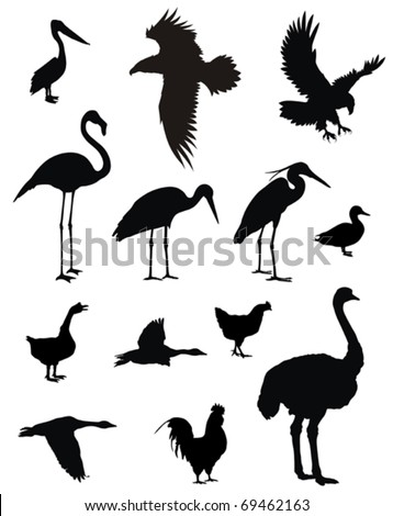 Vector illustration of various birds silhouettes - stock vector