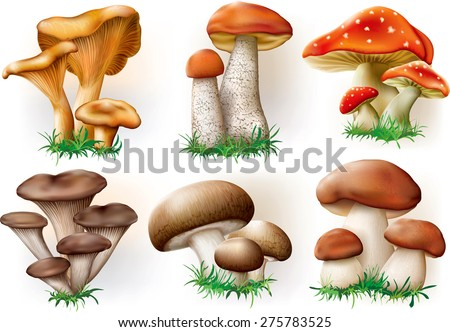 vector illustration of various fungi boletus, champignon, Leccinum, Chanterelle, Oyster - stock vector