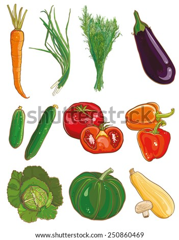 Vector illustration of vegetables: carrots, green onions, dill, eggplant, cucumber, tomato, pepper, squash, mushrooms, cabbage, savoy, pumpkin, vegetable marrow. Food ingredients set. eps 10 - stock vector