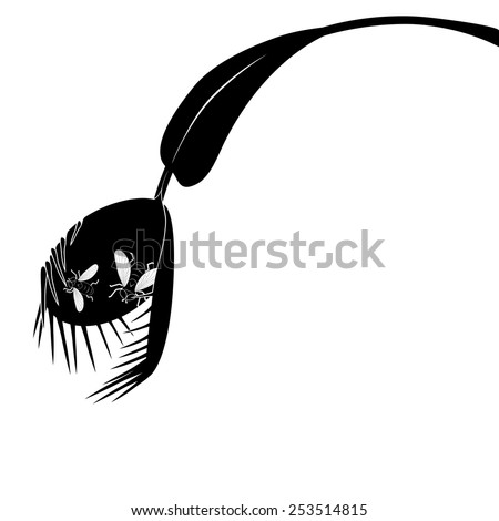 vector illustration of Venus flytrap in black and white colors with fly - stock vector