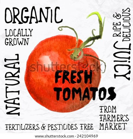 Vector illustration of watercolor tomato, hand drawn in in 1950s or 1960s style. Concept for farmers market, organic food, natural product design, juice, sauce, ketchup, etc. - stock vector