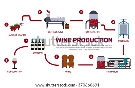 Vector illustration of wine making. How wine is made, wine elements, creating a wine, winemaker tool set and vineyard, flat infographic. Production of alcoholic beverages. - stock vector