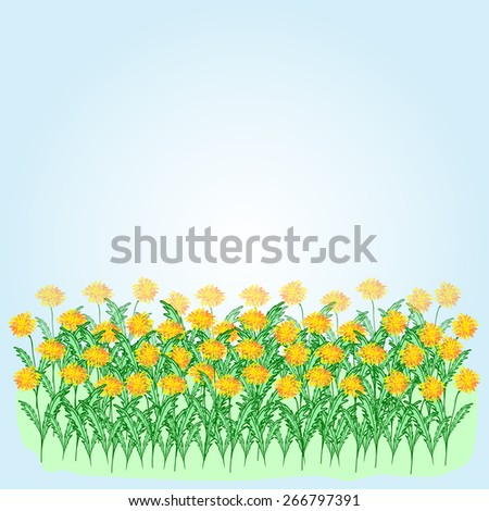Vector illustration of yellow dandelions on a blue background - stock vector