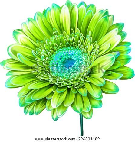 Vector illustration of yellow green Dahlia flower. Spring flower.Isolated on white background. - stock vector